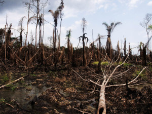Oil-sodden marshland in the Niger Delta. Photo courtesy Sosialistisk Ungdom (SU)/Flickr