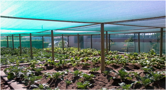 The food garden at the Etafeni Centre in Cape Town's Nyanga township is a social enterprise that provides one of South Africa's most deprived communities with fresh, affordable produce. Photo courtesy Kyle Hiebert