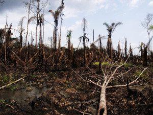 Oil-sodden marshland in the Niger Delta. Photo courtesy Sosialistisk Ungdom (SU)/Flickr